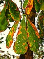 Autumn leaves, Ward Park - geograph.org.uk - 1024022.jpg