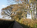 Autumnal trees, near Lower Burrowton - geograph.org.uk - 1589616.jpg