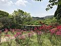 Azalea flowers in Mifuneyama Garden 9.jpg