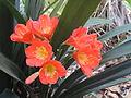 BCBG Flowers 12.JPG