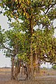 Badlapur Gaon, Badlapur, Maharashtra 421503, India - panoramio (35).jpg