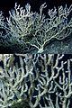 Bamboo coral miami terrace.jpg