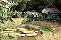 Bambouseraie de Prafrance 20100904 007.jpg