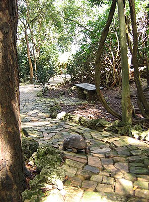 Barbados Wildlife Reserve - A red-footed tortoise wanders down a path in the wildlife reserve.