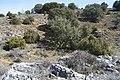 Barranco - panoramio (4).jpg