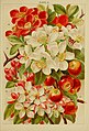 Beautiful flowering trees and shrubs for British and Irish gardens (1903) (20350271502).jpg