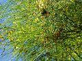 Bee tree balboa park cactus.jpg