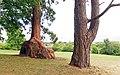 Belle Vue Park 3.jpg