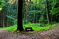 Bench in the woods - Flickr - Stiller Beobachter.jpg
