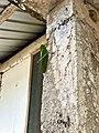 Big-Ass Grasshopper - Flickr - krossbow.jpg