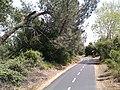 Bike trail near Russi and Blue Ravine roads - panoramio.jpg