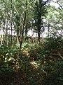 Bineham Woods - geograph.org.uk - 1493423.jpg