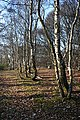 Birch Woods - geograph.org.uk - 1748461.jpg