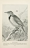 Bird-life; a guide to the study of our common birds (1899) (20383537775).jpg