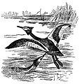 Bird Watching (Selous1901) p150.jpg