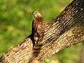Bird on the Tree.jpg