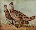 Birds and nature magazine (1896) (20197453859).jpg