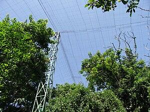 Birds of Eden - Masts and mesh
