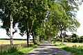 Birken gesäumte Straße - panoramio.jpg