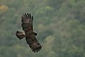 Black Eagle DSC6127.jpg