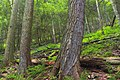 Black Forest Trail (Revisited) (13) (21173333626).jpg