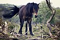 Black horse on branches (Unsplash).jpg