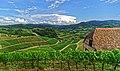 Blick vom Schloss Staufenberg auf die Weinlandschaft rund um Durbach. 01.jpg