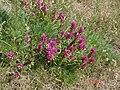 BlomsterBredfjed.JPG