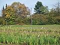 Blumen zum Selberpflücken an der Krautgartensiedlung in Maichingen - panoramio.jpg