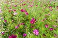 Blumenwiese in Bästendhardt.jpg