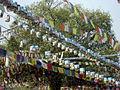 Bodhi Tree (2380490075).jpg