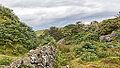 Bodmin Moor, Cornwall-9102.jpg