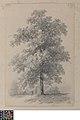 Boom, 1852, Groeningemuseum, 0040241000.jpg