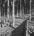 Bosbewerking, arbeiders, boomstammen, gereedschappen, zagen, Bestanddeelnr 251-9991.jpg