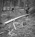 Bosbewerking, arbeiders, boomstammen, houtbewerking, Bestanddeelnr 251-7135.jpg
