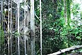 Bosque inundado-cosmocaixa 2014 (3).JPG