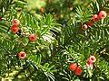 Botanični vrt (3990157133).jpg