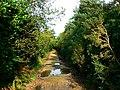 Bridleway through Lower Hyde Heath, Dorset - geograph.org.uk - 587965.jpg