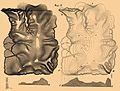 Brockhaus and Efron Encyclopedic Dictionary b84 599-2.jpg