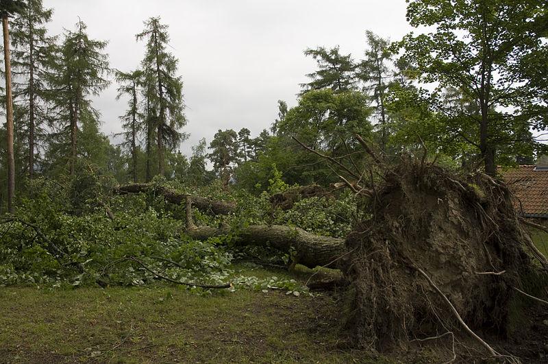 File:Broken Trees Skøyen.jpg