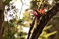 Bromeliaceae y vegetacion de Bosque Tropical en Costa Rica 01.jpg