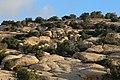Bsaira District, Jordan - panoramio (43).jpg