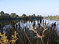 Bulrush Lake - geograph.org.uk - 1005905.jpg