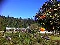 Butchart garden - panoramio.jpg