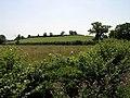 Butter Hill - geograph.org.uk - 202185.jpg