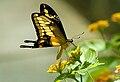 ButterflyOnFlowers.jpg