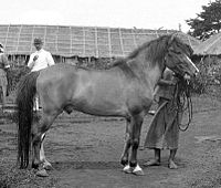 COLLECTIE TROPICAL MUSEUM Stallion uit de Bataklanden TMnr 10013315 cropped.jpg