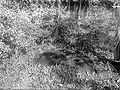 COLLECTIE TROPENMUSEUM Megalitische vijzel in Padjarboelan TMnr 10025757.jpg