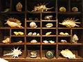 Cabinet of curiosities - National Geographic Museum - DSC05069.JPG