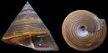 Calliostoma javanicum shell.jpg